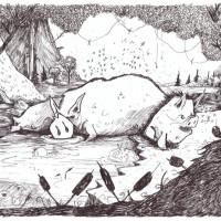 Cochons du marais - Meï