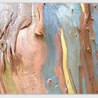 Eucalyptus - Emmel